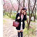 2011 春。櫻花林