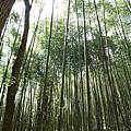 20080301八仙山