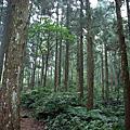 20090718東眼山