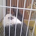 兔兔寄宿、中途