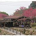 【台中】新社櫻花林
