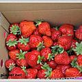 2009.12.29關西採草莓
