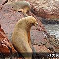 祕魯旅遊 Peru_ Islas Ballestas鳥島 & Ica滑沙(綠洲Huaccahina) 2012.11月