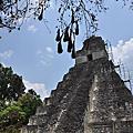 瓜地馬拉旅遊 Guatemala 馬雅文明 Tikal