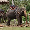 Thailand 2009 July