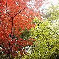 【旅行|行程】2018 東京近郊輕旅行