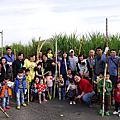20160110【全職媽媽遛小孩-192】竹山採收甘蔗一日遊