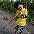 20160110【全職媽媽遛小孩-192】竹山興達糖廠採收甘蔗+竹山老街一日遊