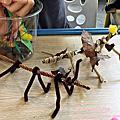 20170525【全職媽媽遛小孩-282】手作自然昆蟲箱