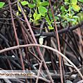 Bali Mangrove Forest|原始生態紅樹林