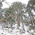 20130125-27有雪有累的雪山主東峰登山記