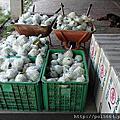 2012/05/14先採有機蕃石榴