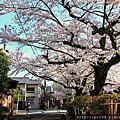 2012京都櫻之旅