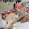 0802貓咪