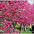 2013.02彰化芬園花卉生產休憩園區