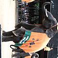 2009泰國之我要騎大象