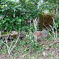 金瓜石戰俘營