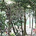2012_新山夢湖