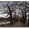 角館町~武家屋敷 檜木內川堤~染井吉野櫻