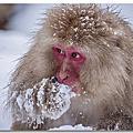 【日本】地獄谷野猿公苑.雪猴