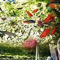 DIY絲蚯蚓﹝紅蟲﹞-魚隻餵食器