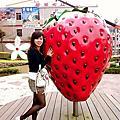 南庄老街+大湖採草莓