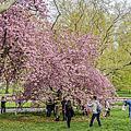 Central Park Spring Apr-2017
