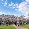 University of Washington Mar-17-2018