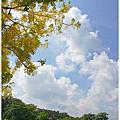 2011六月。雲林蜜蜂故事館+摩爾花園