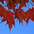 秋天的顏色
