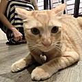猫ちゃんの友達餐廳