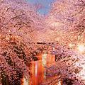 【婚禮佈置】愛.櫻花