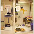 200703 NY ASPCA
