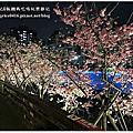 2019 樂活櫻花季&內溝溪八重櫻(夜櫻)