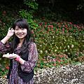 042510 -- 桐花、三峽、大溪