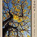 台南市林森路 黃金風鈴木