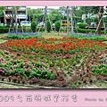 2009台南府城賞花季