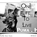 Puma。H