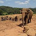2012-05-04 [斯里蘭卡] Elephant Orphanage