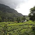 2012-05-05 [斯里蘭卡] Nuwala Eliya