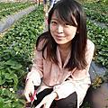 2014-03-01 [苗栗] 大湖草莓趣
