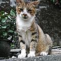 侯硐的貓 PII