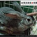 中途兔-小卒