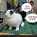 中途兔-小混混