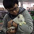 圓仔 - 鶯歌棄兔