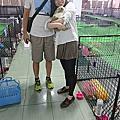 老大 - 台北錦州街勸導單兔