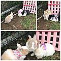 和平 - 和平公園座椅旁棄兔