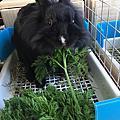 安東妮 - 新莊民安東路棄兔