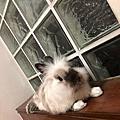 酷滋 - 板橋漢生停車場棄兔