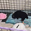 片片 - 汐止機車停車格棄兔